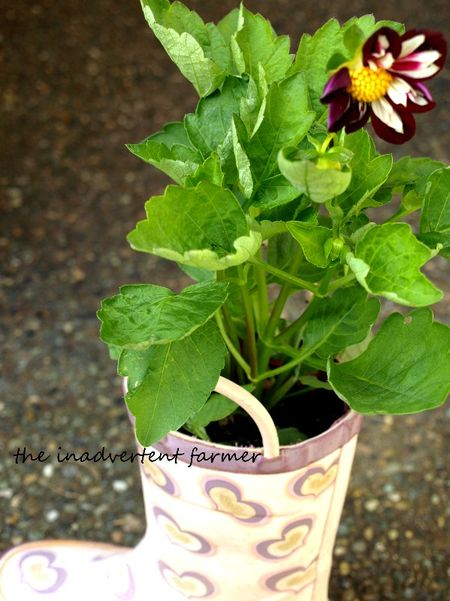 Flower boot
