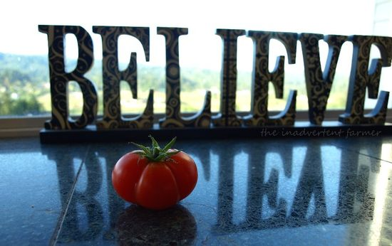 Believe tomato red reflection