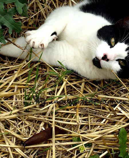 Cat black white garden green eyes slug