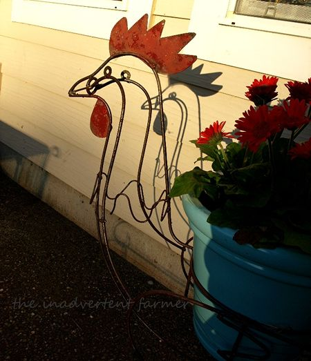 Rooster shadow gerbera red orange daisy
