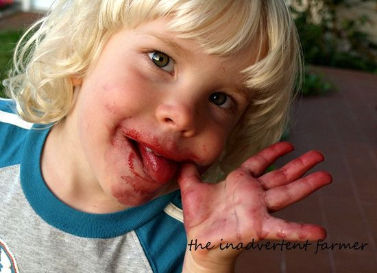 Little boy blonde cherry face