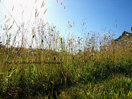 Field of daisy flowers sunset wildflowers