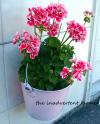 Corona bucket turned planter