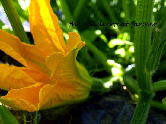 Squash blossom yellow gold
