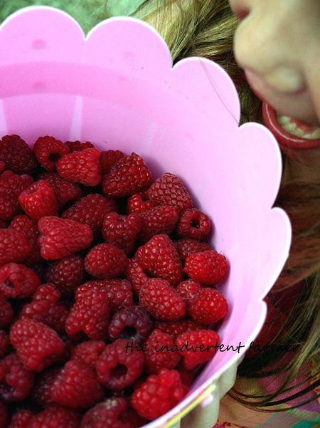 Raspberry picking pink bucket full