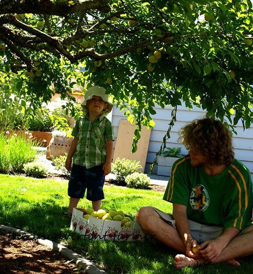 Plum picking boys yellow