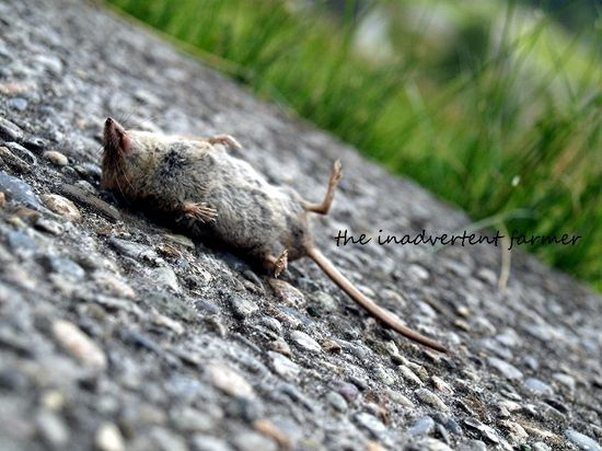Dead mouse depth of field