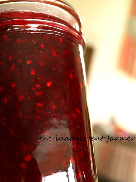 Plum berry jam in jar