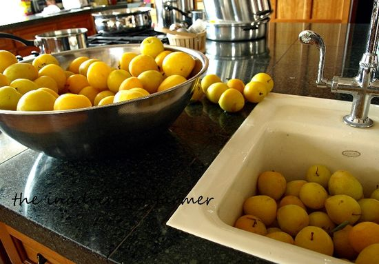 Yellow plums syrup bowl full