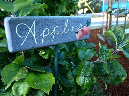 Master gardener apple orchard