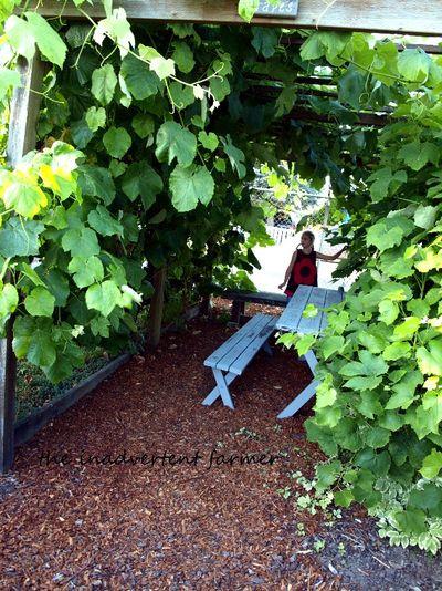 Master gardener grape arbor