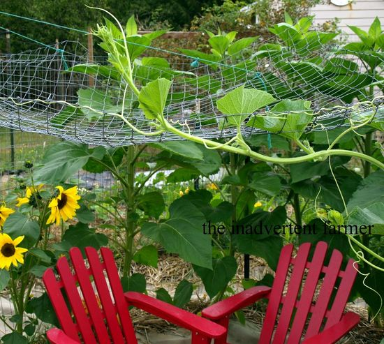 Maze garden roof gourd