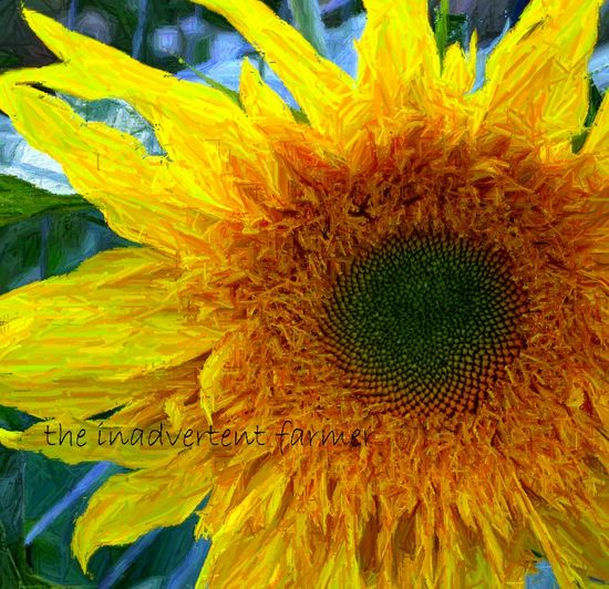 Sunflower water color