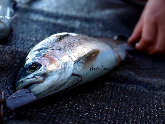 Fish trout lake
