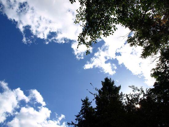 Clouds trees blue sky