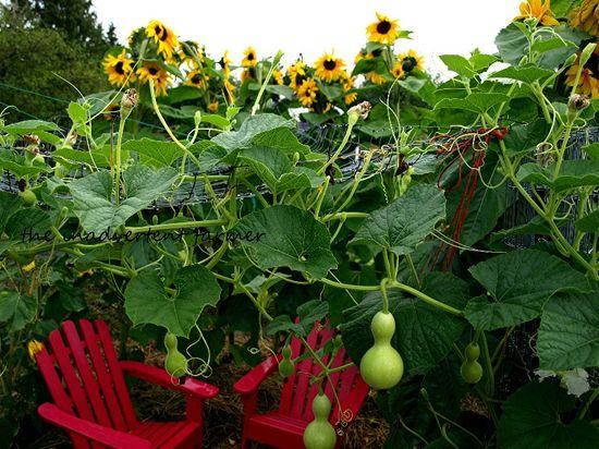 Garden maze gourd roof