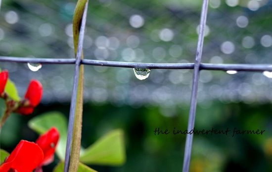 Raindrop on fence maze