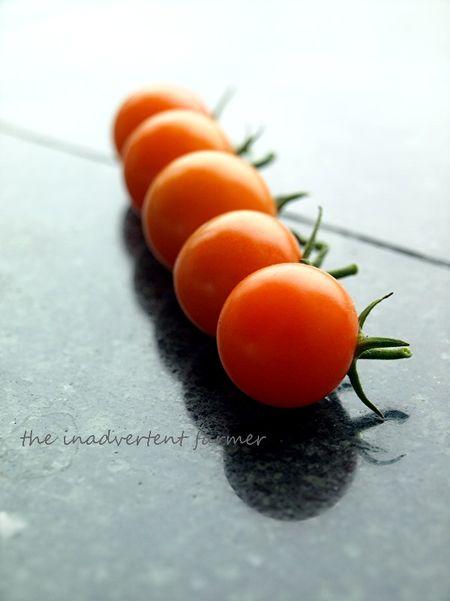 Tomato line orange