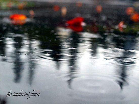 Rain on driveway fall