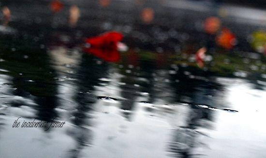 Raindrops on driveway