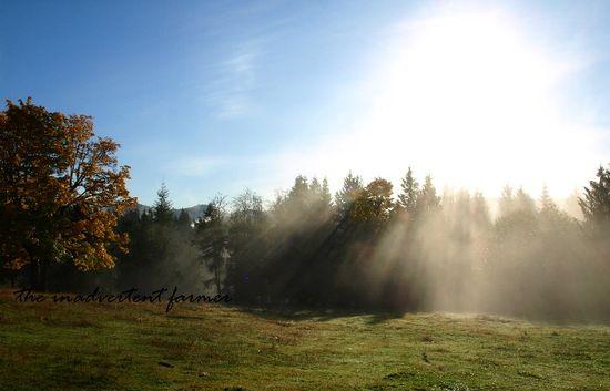 Sunbeams field morning tree