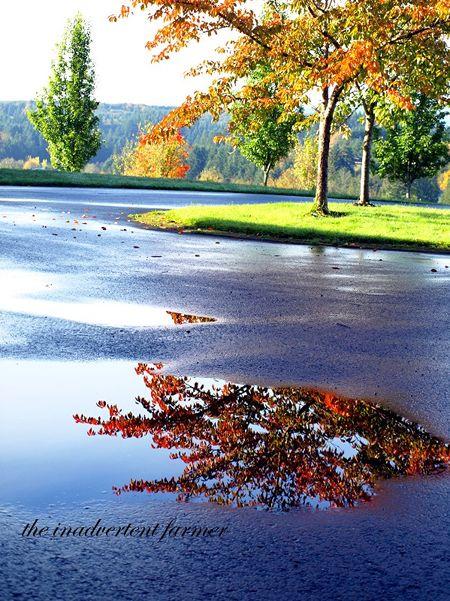 Rain puddle autumn reflection