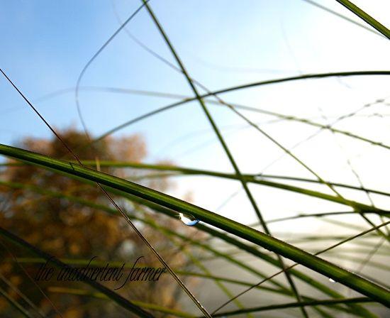 Raindrop grass mist