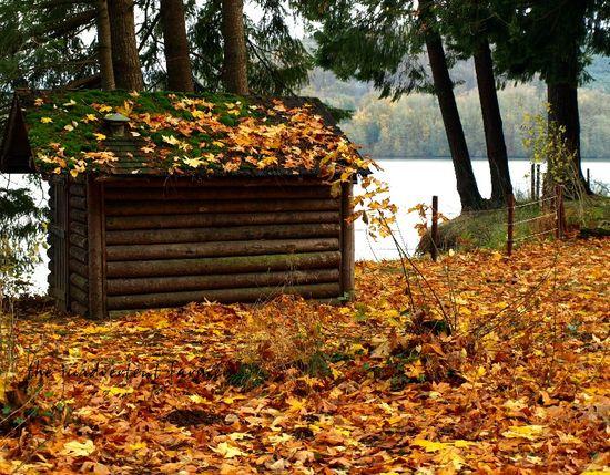 Log cabin lake leaves