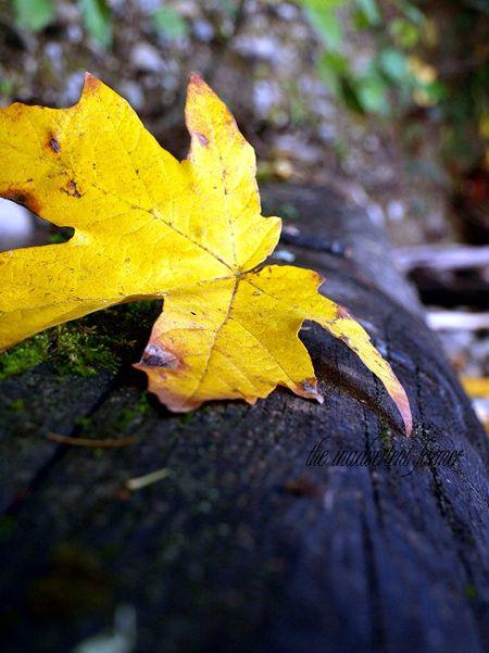 Leaf on log autumn