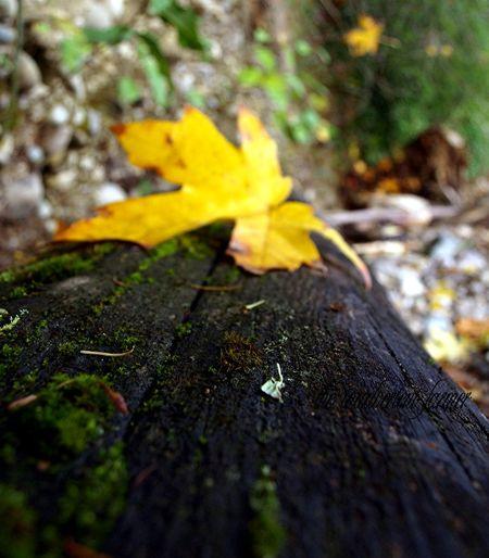 Leaf autumn on log