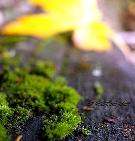 Moss on log leaf autumn