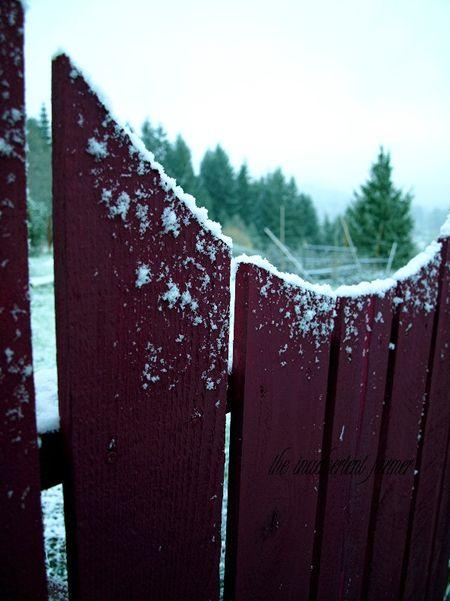 Snow on garden gate