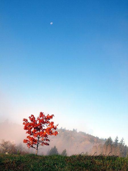 Tree moon mist