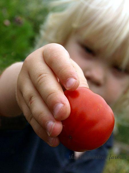 Tomato napper1
