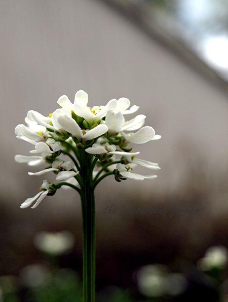 White flower side petals bokeh