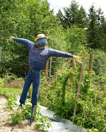 Scarecrow garden big homemade blue