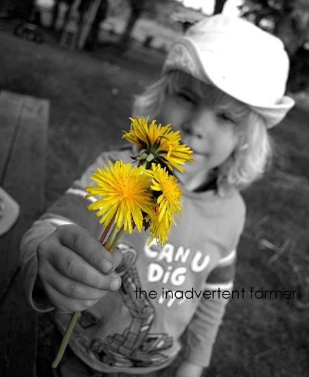 Dandelion offering boy black white