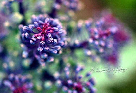 Broccoli purple macro saturation color macro bokeh