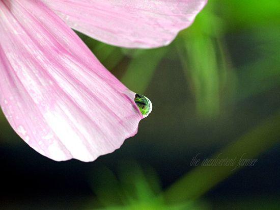 Water drop cosmo macro bokeh garden