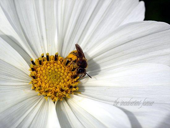 Bee pollen flower macro cosmo