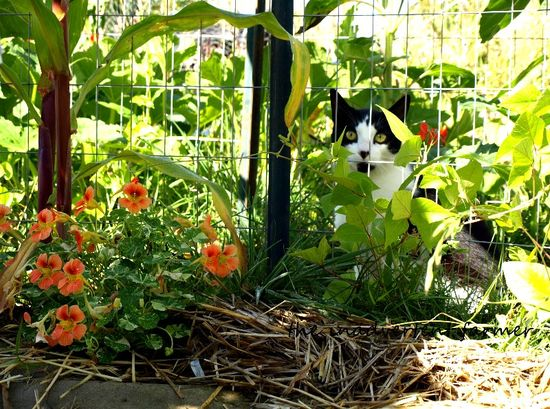 Cat garden black white green eyes