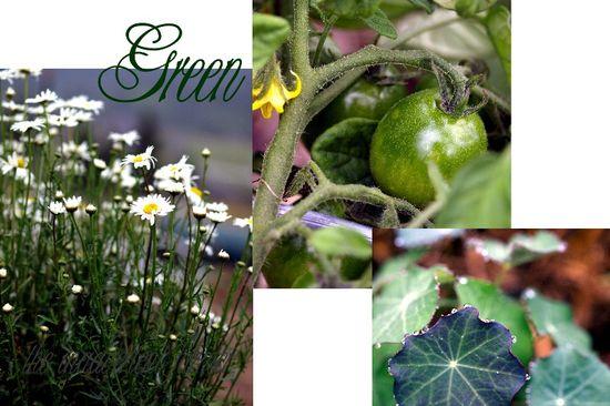 Green garden collage
