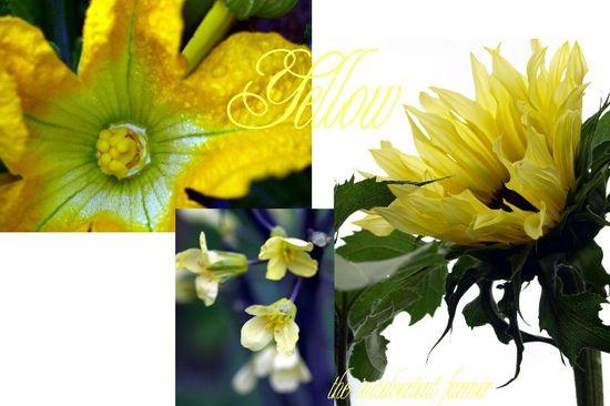 Yellow garden collage