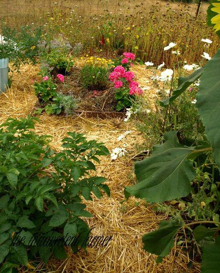Garden box path raised bed