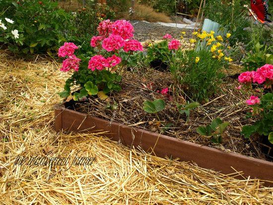 Garden box raised bed