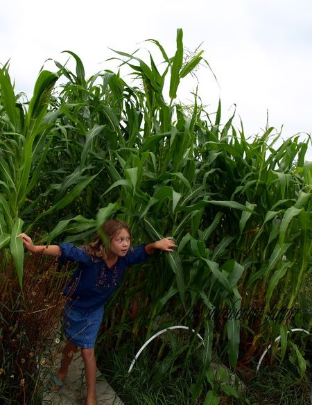 Corn row garden kid