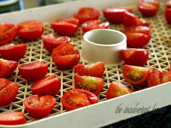 Tomato dehydrator drying red