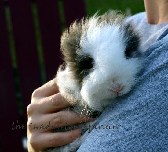 Ollie rabbit windblown