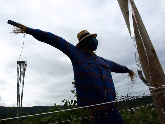 Scarecrow big large