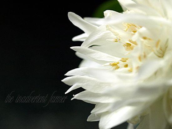 Flower macro white black perspective